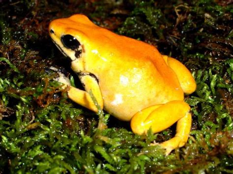 7 Most Poisonous Animals by 7 Most Dangerous Animals In The World You Don T About