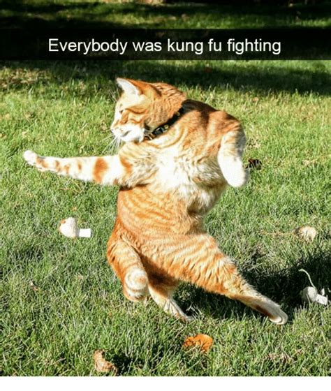Everybody Was Kung Fu Fighting by Everybody Was Kung Fu Fighting Kung Fu Meme On Sizzle