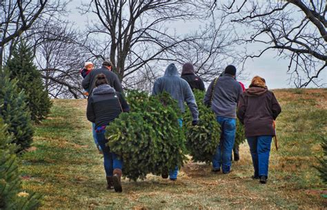 photo gallery snickers gap christmas tree farm loudoun now