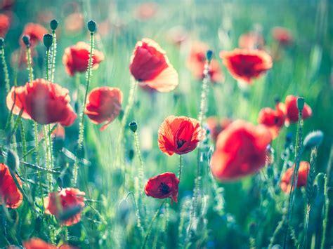 imagenes flores relajantes fondos de flores para twitter imagui nice pics