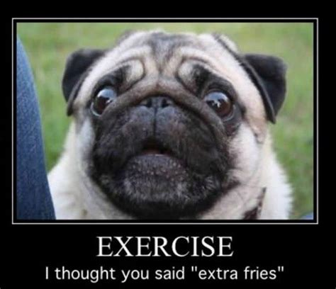 Pug Meme - exercise or extra fries lol your daily chuckle