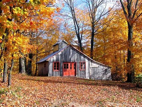 Cabin A Cer by Maple Sugar Shack In Vermont Fall