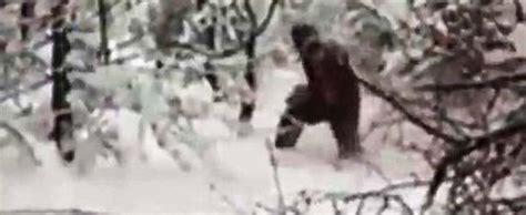 imagenes reales yeti investigadores graban por primera vez al yeti en un bosque