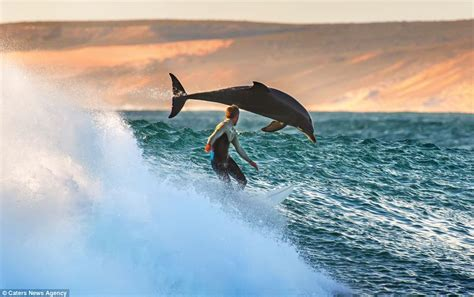 Surfers Australia by Surfer Trent Sherborne Goes To To With Pod Of