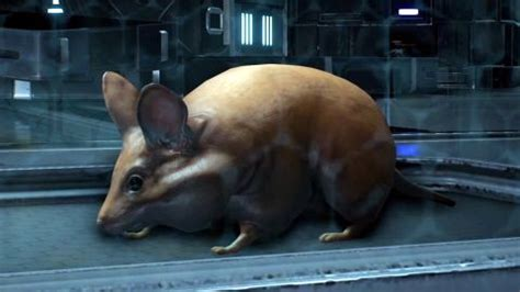 mass effect andromeda pet locations guide space hamster