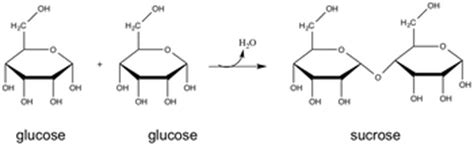 dehydration definition dehydration synthesis definition reaction exles