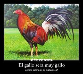 gallos con frases imagenes de gallos con frases newhairstylesformen2014 com