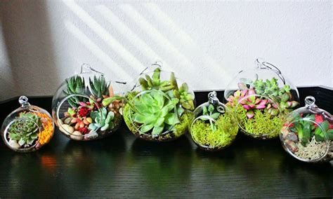 cute plants succulent plants lucky bamboo the cute plants groupon