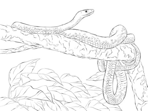 Black Mamba Coloring Pages eastern green mamba on a tree coloring page free