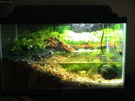 axolotl tank pets pinterest axolotl tank  tanks