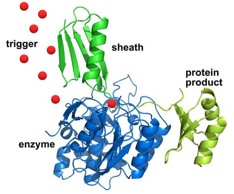 protein enzymes biochemical on switch could solve protein purification