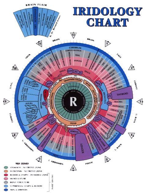 printable iridology eye chart iridology chart r sensitive life