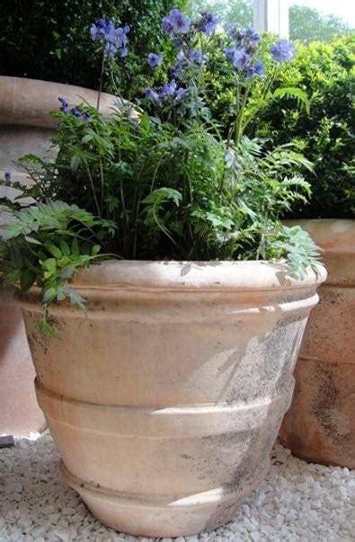 vasche per piante da terrazzo vasi terrazzo vasi