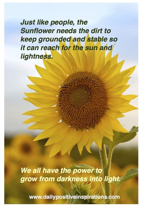 themes in the story when the sun goes down sunflower quotes quotesgram