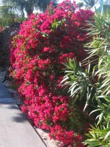 panoramio photo of wonderful villa flowering hedges