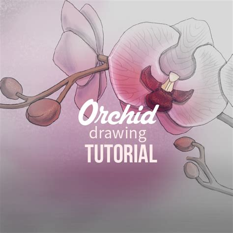 tutorial picsart drawing how to draw orchids with picsart