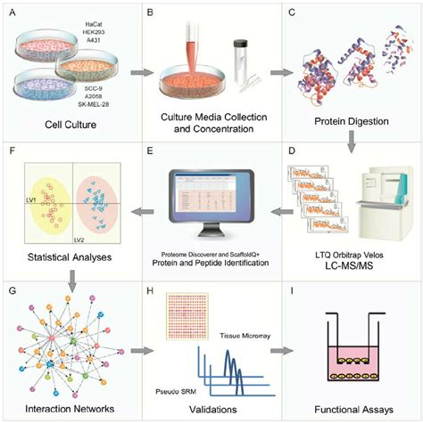 proteomics workflow experimental workflow and overview of the proteomics and