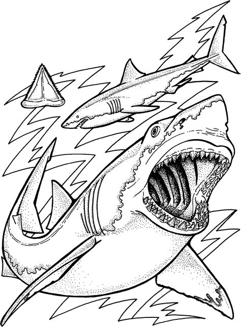 cool coloring pages of sharks shark coloring pages for adults cool shark printable
