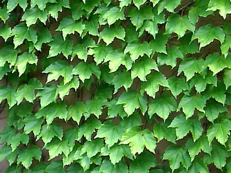 18 valuable vines hgtv