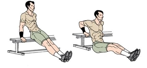 Bench Dips Exercise to build triceps muscle