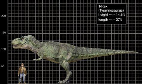 3 5 m to feet tyrannosaurus rex wiki dinosaurios dgmp fandom powered