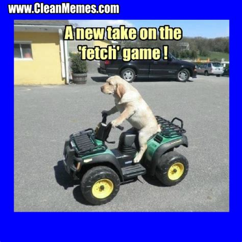 Funny Meams - pics for gt funny clean animal memes