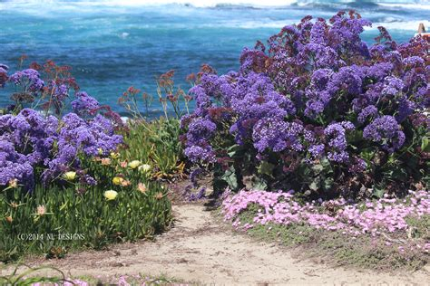 sea lavender nldesignsbythesea