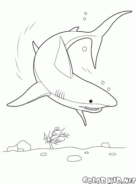 shark coloring page coloring page shark