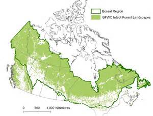 boreal forests of canada