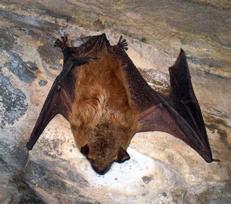 bat program