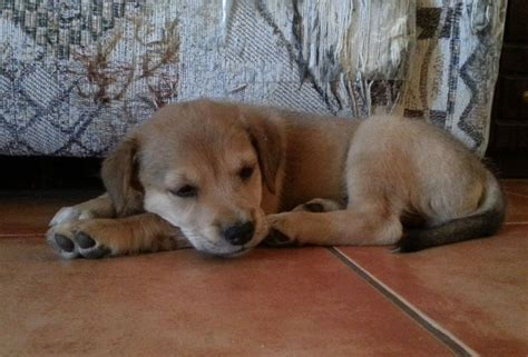 rescue puppy forgotten to found a rescue pup resurrected