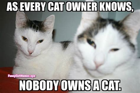 Cat Meme Pictures - nobody owns a cat funny cat meme