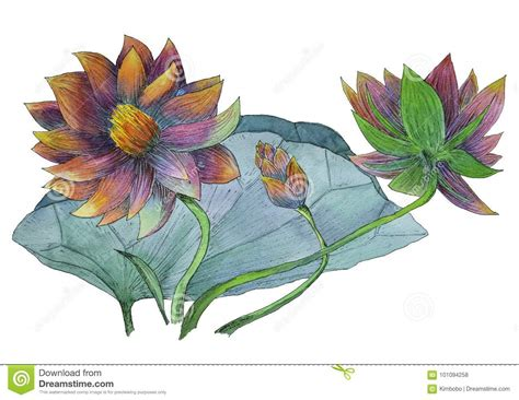 Lotus Leaf Original 30pcs watercolor painting pink lotus flower stock photos 137 images