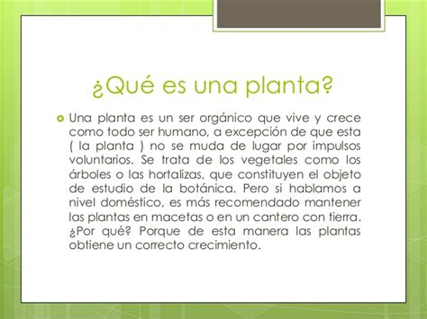 que es layout de una planta crecimiento de una planta