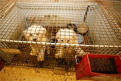 missouri puppy mills missouri puppy mills the best friends