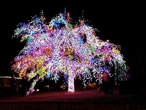 lights columbia mo mid missouri decorations the magic tree