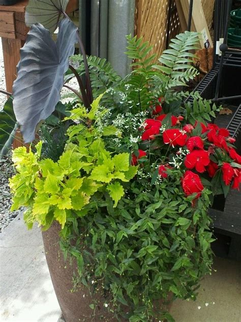 shade container garden shade container garden garden containers sensational