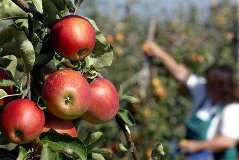apple australia travelettes 187 187 a visa for australia