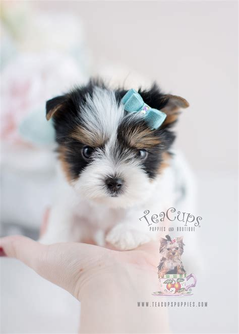 puppies for sale in waterloo iowa for yorkies home improvement self catering cottages home