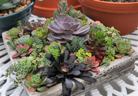 planters for succulents succulent planters idea book drought tolerant planters