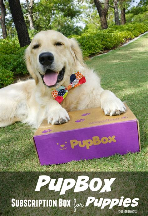puppy subscription box puppy bliss pupbox subscription box for puppies golden woofs