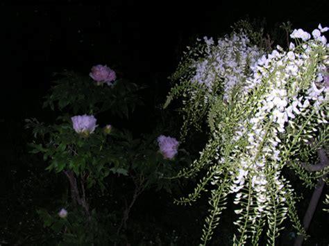 fiore di notte le piante e la notte