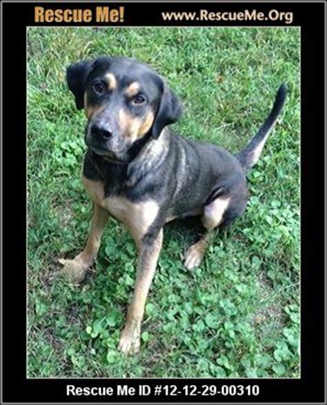 nc rottweiler rescue carolina rottweiler rescue adoptions rescueme org