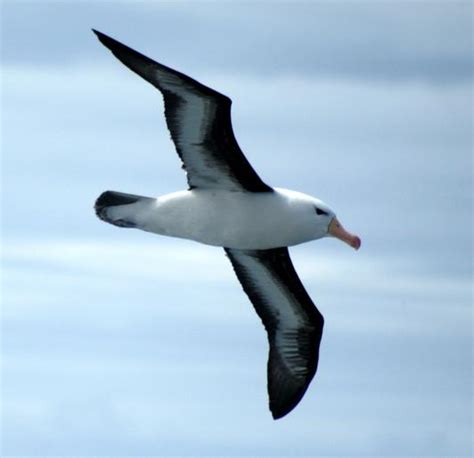testo l albatro ecole pr 233 vert hussigny godbrange po 233 sie l albatros