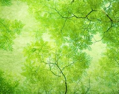 forest nature template image backgrounds for powerpoint