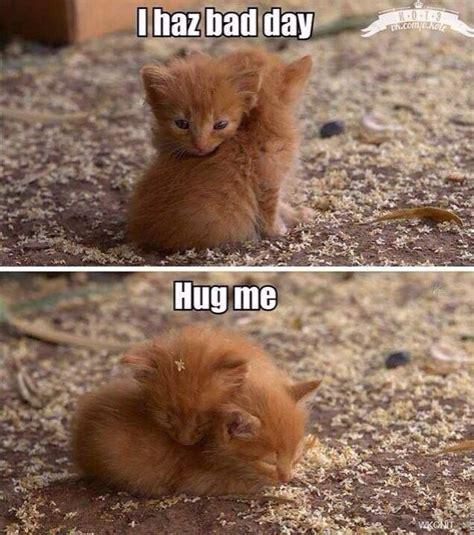 Cat Hug Meme - too cute kitten hugs snuggles cat memes pinterest