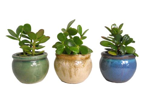 small house plant need a vote comments on these favor ideas weddingbee