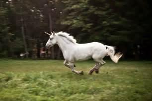 pin real unicorns found alive on pinterest