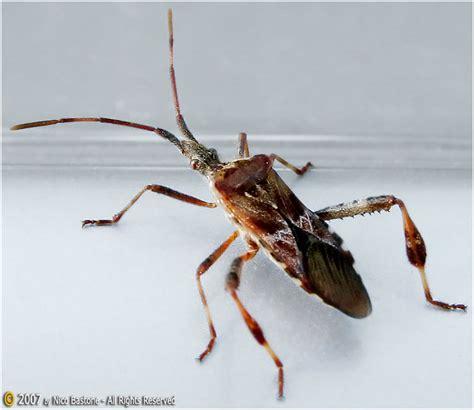 sognare insetti volanti image gallery insetto