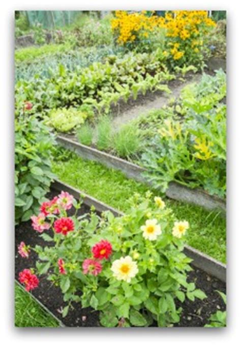 vegetable garden what to plant together 100 vegetable garden what to plant together how to
